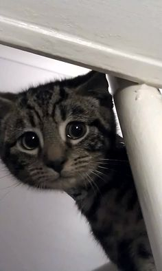 """=^..^=Thanks, Pinterest Pinners, for stopping by, viewing, re-pinning, & following my boards.  Have a beautiful day! ^..^ and """"Feel free to share on Pinterest ^..^   #catsandme #cats #doghealthcareblog"""