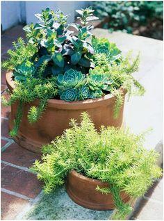 Match-Plants-Under-the-Same-Sun