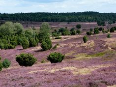 Bajkowe pola