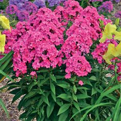 1 quart $12.95 The perfect addition to your sunny border!