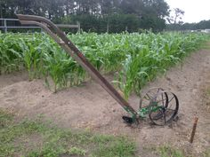 We used the Double Wheel Hoe (https://hosstools.com/product/double-wheel-hoe/) with Plow Attachments (https://hosstools.com/product/plow-set) to hill our corn right in time before the big storms came on Saturday. Throwing dirt to the sweet corn keeps the plants from getting uprooted and blown over during periods of high winds. #growyourownfood