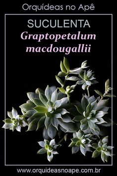Echeveria, Cactus E Suculentas, What Inspires You, Plantar, Succulents, Green, Nature, Gardening, Inspiration