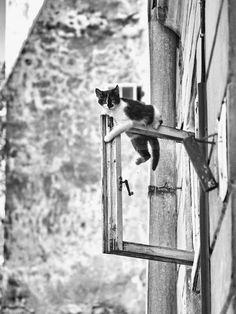 Cat ON a window?