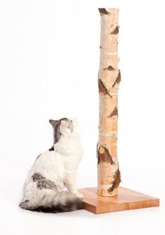 a tree cat scratching post - very cool!