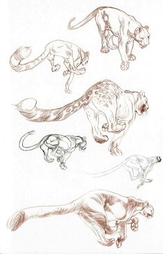 Claire Wendling | Fauna - Real