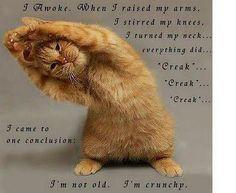 I'm Crunchy!