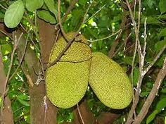 Interesting Brazilian Fruits - Frutas Brasileiras Interessantes