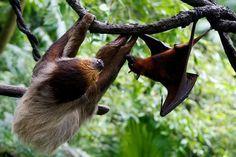 Sloth & Bat