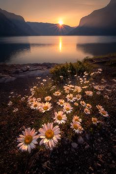 Minnewanka Lakeside - Minnewanka Lake near Banff Canada. Wildfires hampered the photography on my recent visit to the Banff area but for this image the diffuse light at sunrise created nice soft highlights for this beautiful bouquet of wildflowers. Beautiful World, Beautiful Images, All Nature, Nature Beach, Banff National Park, Belle Photo, Beautiful Landscapes, Wild Flowers