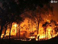 bushfires and Twitter. social media proves its worth
