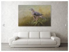 """Female Goshawk painting by Alan M Hunt. Purchase this painting as a cancas print on Fineart America.   Female Goshawk Painting canvas print by Alan M Hunt.   Bring your artwork to life with the texture and depth of a stretched canvas print. Your image gets printed onto one of our premium canvases and then stretched on a wooden frame of 1.5"""" x 1.5"""" stretcher bars (gallery wrap) or 5/8"""" x 5/8"""" stretcher bars (museum wrap). Your canvas print will be delivered to you """"ready to hang"""" with pre-attach Painting Canvas, Canvas Prints, British Wildlife, Birds Of Prey, Got Print, Stretcher Bars, Stretched Canvas, Great Artists, Canvases"""