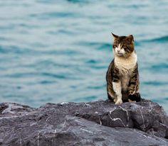 """Küçükken yassı taşlara dilek yazıp denize fırlatırdık. Üçten fazla sekmeliydi ki dilek olsun.  Bir taş fırlatıp dilek tutmuştum...  Boşuna dememişler """"Mucizeler onlara inanların başına gelir"""" :)"""