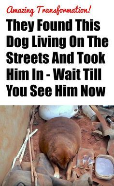 I can't believe its the same dog!!! http://iheartdogs.com/they-found-this-dog-living-on-the-streets-and-took-him-in-wait-till-you-see-him-now/: