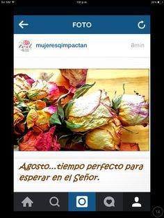 #instagram #seguir #agosto