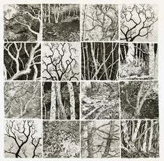 Black and white tree study. Gravure Illustration, Illustration Art, Collagraph Printmaking, Artist Sketchbook, A Level Art, Tree Art, Art Techniques, Art Blog, Art Lessons