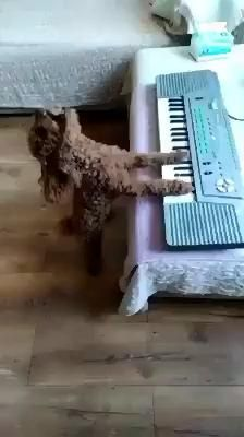 Cute Animal Videos, Funny Animal Pictures, Dog Pictures, Funny Animal Memes, Funny Dogs, Cute Little Animals, Cute Funny Animals, Funny Cute, Cute Cats