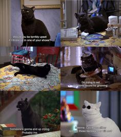 sabrina the teenage witch, salem, television