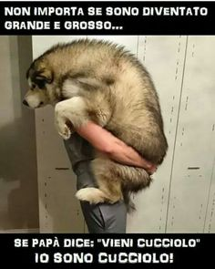 Amore Cute Cats And Dogs, I Love Dogs, Animals And Pets, Baby Animals, All Dogs, Funny Animals, Cute Animals, Italian Memes, Funny Scenes