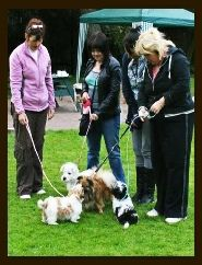 Puppy Classes, Puppies, Dogs, Animals, Cubs, Animales, Animaux, Doggies, Baby Dogs
