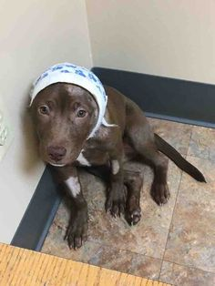 11/19/16 PLEASE CONSIDER DONATING!! Little Bear, who is only 3 months old, was brought to Genessee County Animal Control Saturday, October 29 in serious condition. She had been viciously attacked by another dog and her throat and ear were torn open. She had multiple bite wounds all over her little body and the wounds were terribly...