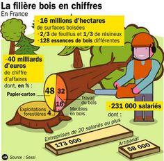 Infographie : Chiffres sur la filière bois. #infographie #foret #bois #pin