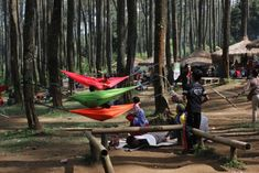 7 Best Orchid Forest Cikole Images Lembang Bandung