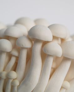 White Mushrooms - Fine Art Photograph by DovieMoon on etsy $14.99 Mushrooms are such beautiful little bits of nature. Some people rue their appearance as a weed or pest, but walking out to the garden to find a patch of tiny mushrooms has sprouted up is one of the most magical things in the world for me.