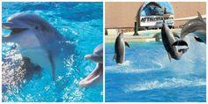 Σύμφωνα με τους επιθεωρητές του υπουργείου περιβάλλοντος, οι εντυπωσιακές επιδείξεις των δελφινιών, ούτε λίγο ούτε πολύ είναι βασανιστήριο