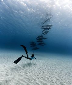 Explore the ocean - discovery - A female diver and beautiful dolphins, Under The Water, Under The Sea, Scuba Diving Quotes, Scuba Diving Gear, Padi Diving, Delphine, Underwater Photos, Underwater Photography, Ocean Life