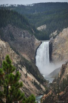 drxgonfly:  Lower Falls, Yellowstone National Park (by drxgonfly)