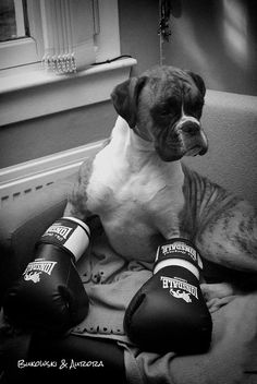 d21035f6bcd 13 Best Boxing...the Sweet Science images