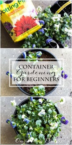 Container Gardening for Beginners | An easy tutorial that shows how to assemble a round container with flowers. #Sponsored