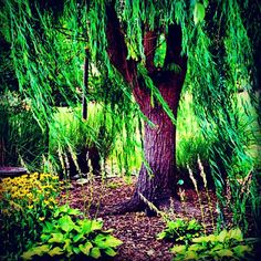 Willow Tree Triptych | For The Home | Pinterest | Willow Tree, Craft And  Craft Art
