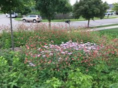 Prairie Gardens & Rain Garden Contractors in Wayne County, MI Prairie Garden, Wayne County, Rain Garden, Native Plants, Perennials, Sustainability, Nativity, Landscape, Green