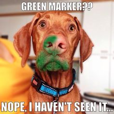This exact scenario happened with a tube of green acrylic paint and our Vizsla, Pele. Vizsla Puppies, Cute Puppies, Cute Dogs, Dogs And Puppies, Weimaraner, Doggies, Funny Animal Pictures, Dog Pictures, Funny Animals