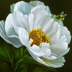 Bee With Peony 6x6, painting by artist M Collier
