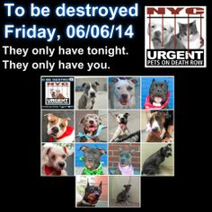 13 beautiful highly adoptable dogs are relying on US to save their lives tonight.  Tonight may be their last night and we only have tonight to save them. Please share everywhere to help give these pups a future. To rescue a Death Row Dog, Please read this: http://urgentpetsondeathrow.org/must-read/    To view the full album, please click here:    https://www.facebook.com/media/set/?set=a.611290788883804.1073741851.152876678058553&type=3 —