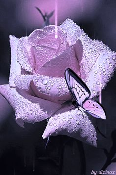 Beautiful butterfly animation on a lavender rose-gif Beautiful Flowers Wallpapers, Beautiful Rose Flowers, Beautiful Gif, Beautiful Butterflies, Pretty Flowers, Purple Flowers, You Are Beautiful, Beautiful Pictures, Butterfly Gif