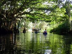 I've paddled these four off-the-beaten-track Florida kayak trails and recommend them for natural beauty and interesting scenery.