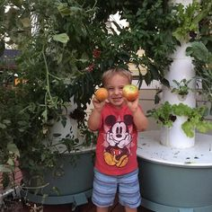 """#TBT day dreaming of last summer when we had a plethora of tomatoes on our #towergarden. I can't wait to ""plant"" tomatoes again-I literally have ants in my pants! Good thing they grow 4x as fast!  Have you guys experienced the tower garden or seen one in person? It literally is one of the B E S T things our family has purchased! Here are a few reasons why we love it: We have fresh produce on our back deck ready to use it's organic the kids can pick it we don't have to remember to water it…"