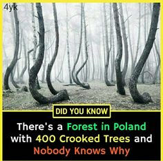 Wow Facts, Real Facts, Wtf Fun Facts, Interesting Science Facts, Interesting Facts About World, Some Amazing Facts, Unbelievable Facts, Physiological Facts, Psychology Fun Facts