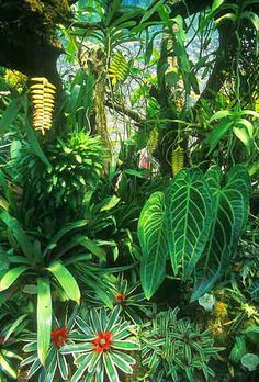 what was not too long ago a dry ex-stone quarry, Lady Walton, an Argentinian, created the lush feeling of a tropical jungle. Tropical Garden Design, Tropical Backyard, Tropical Landscaping, Garden Landscaping, Landscaping Ideas, Landscaping Melbourne, Unusual Plants, Exotic Plants, Cool Plants
