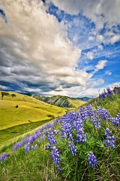 Missoula, Montana spring time by Evan Thompson