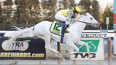 Hansen the white racehorse