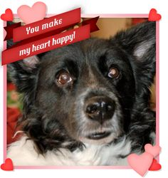 Great expression! #Valentine #Dog where can you buy pet protector online ?https://www.youtube.com/watch?v=oYq2GffOZsc