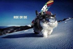 #cat #rider #wanttoski #fun