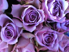 gorgeous...My best friend once sent these to me on my birthday. It was really special