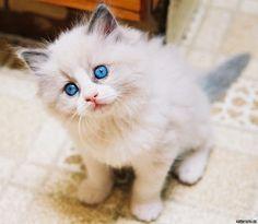 Photo des plus beau chat