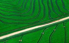 Scenic Prairie Tapestries: Contoured rice field in Arkansas