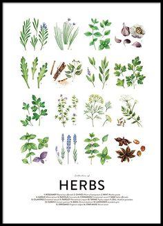Culinary herbs, julisteet ryhmässä Julisteet  / Koot / 50x70 cm @ Desenio AB (8589)